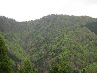 シチグレ谷の新緑