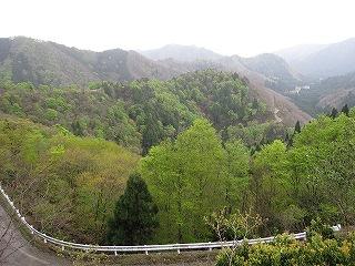 小入林道の新緑