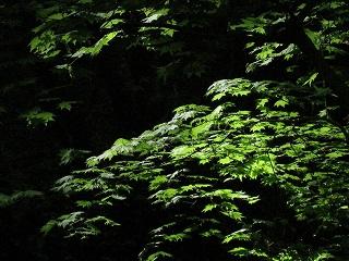 20090511滝川渓谷 061