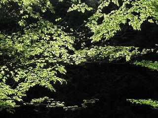20090511滝川渓谷 062