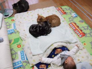2009_0120cats0004.jpg