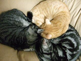 2009_0127cats0020.jpg