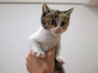 2009_0527cats0014.jpg