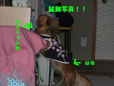 CIMG3851.jpg