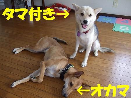 2008_0814_3.jpg