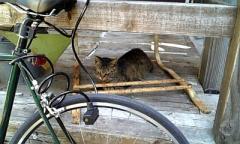 モダナーク猫1
