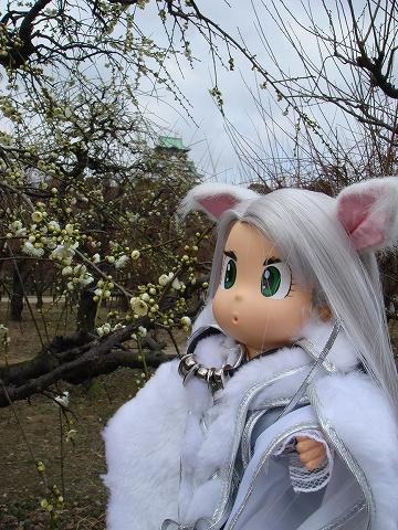 oosakajyoginko09-DSC03891.jpg