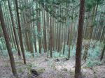 many-tree.jpg