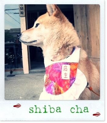 shibacha.jpg
