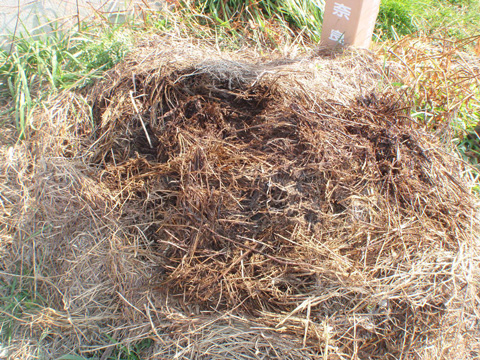 野積みにしてあった刈り草も