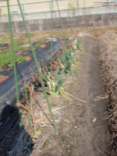 茄子の跡地