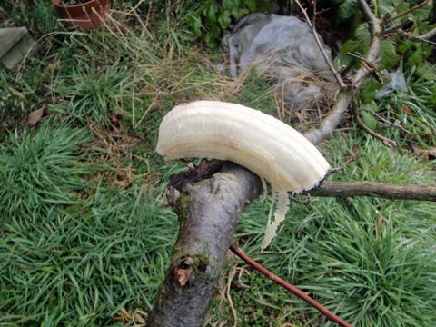 至高のバナナ(笑)