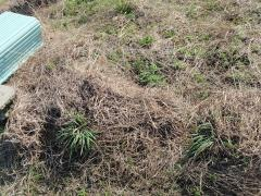 枯れ草でいっぱい
