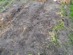 草の根がいっぱい…