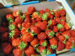 イチゴがいっぱい~