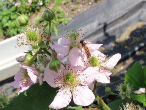 これもハチ?