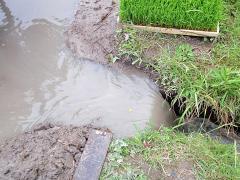 水位を下げるために排水しま