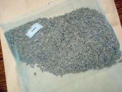 黒米の種籾