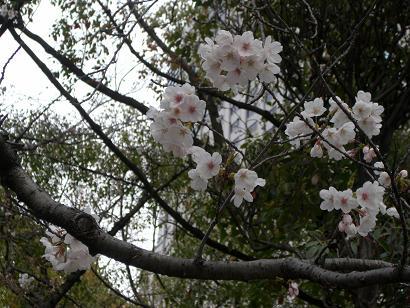 8:53桜