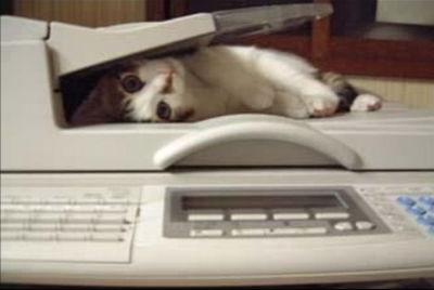 faxcat.jpg