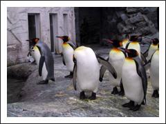 a_penguin.jpg
