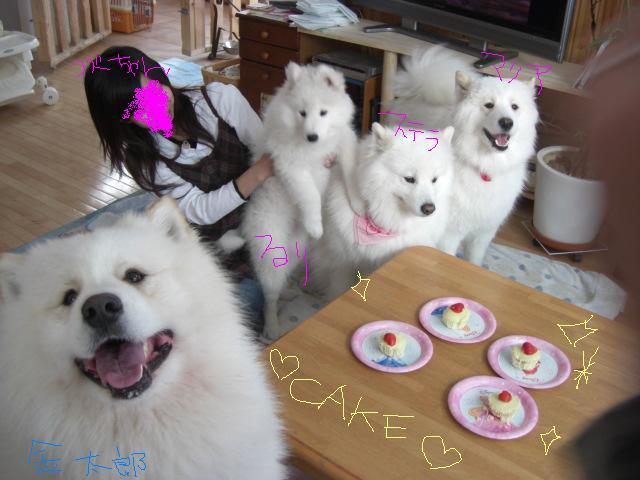 ケーキを前に4匹.jpg