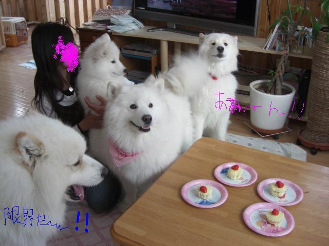 その5限界ケーキ.jpg