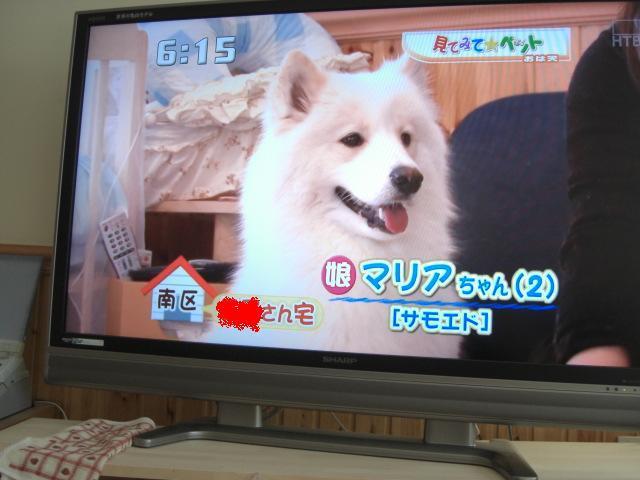 南区マリアちゃん.jpg