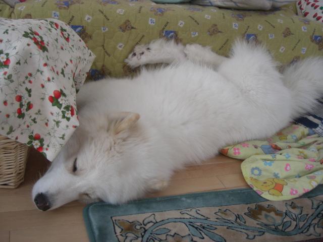 最近のマリアはソファーによっかかりねんね.jpg