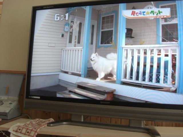 ポーチが大好きステラちゃん.jpg