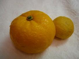 柚子の香りに包まれて