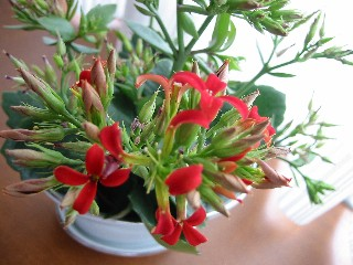 新しいお花が*