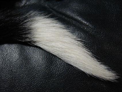 キラ:尻尾の先