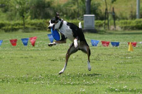 踊る犬(2009.6.14SDC竜門ダム)