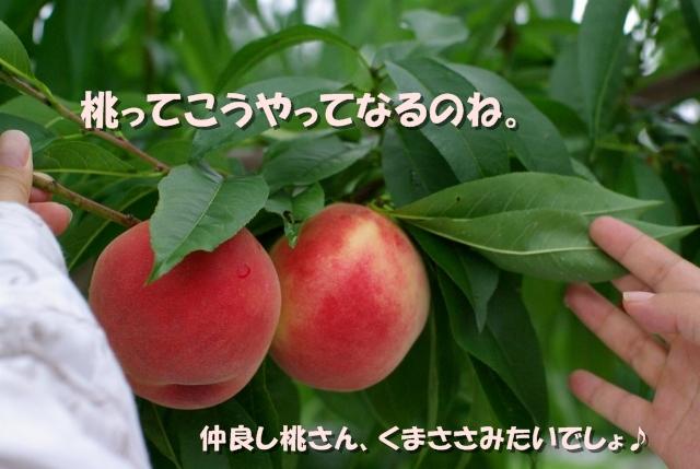 桃狩り04