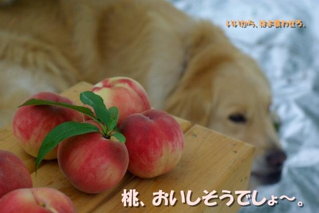 桃狩り06