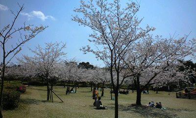 吉野公園の桜2
