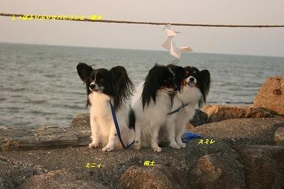 ミニィ、侑士、スミレと海