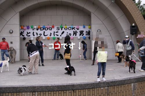 DPP_06_20101113010428.jpg