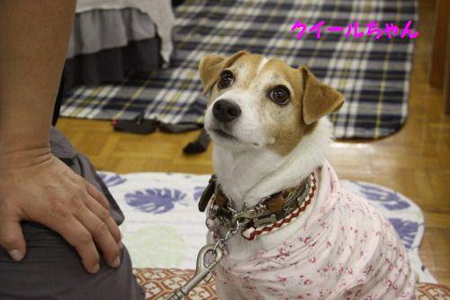 DPP_10_20101026220449.jpg