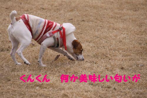 DPP_12_20110304000956.jpg