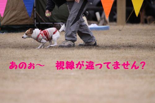 DPP_13_20110304002100.jpg