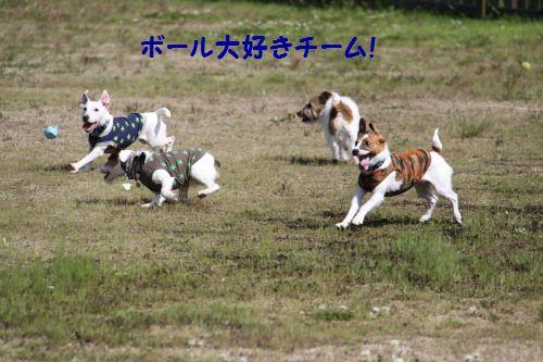 DPP_22_20100502010224.jpg