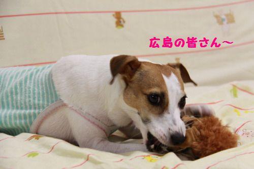 DPP_25_20111013221737.jpg