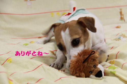 DPP_26_20111013221737.jpg