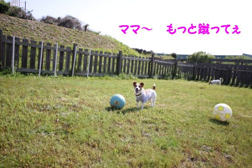 DPP_29_20100502010258.jpg