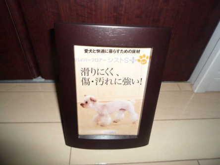 DPP_31_20110814123251.jpg
