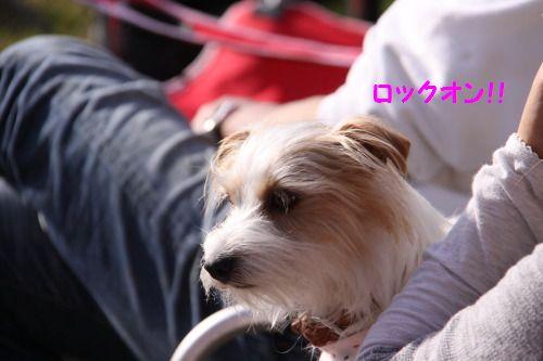 DPP_35_20100502010323.jpg