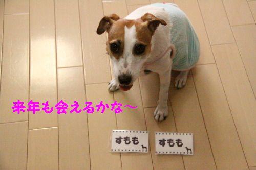 DPP_41_20100923235732.jpg