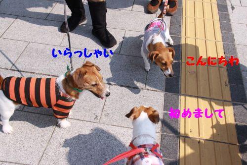 DPP_5_20111012212732.jpg